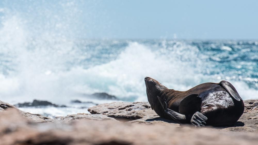 Seal sunbathing.